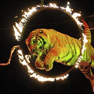 Цирки Краснослободска