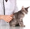 Ветеринарные клиники в Краснослободске